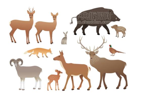 小鹿 动物插图